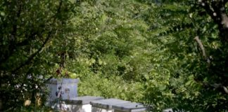 Agrosaveti---pcelarstvo---Trgoviste---01