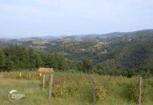 Agrosaveti---organska-malina-i-kupina---Brezovice---Valjevo---01