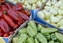 Agrosaveti---proizvodna-povrca---Mala-Vranjska---01