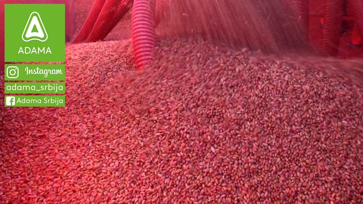 Agrosaveti---Adama---psenica---setva---gajenje---zastita---herbicid-01
