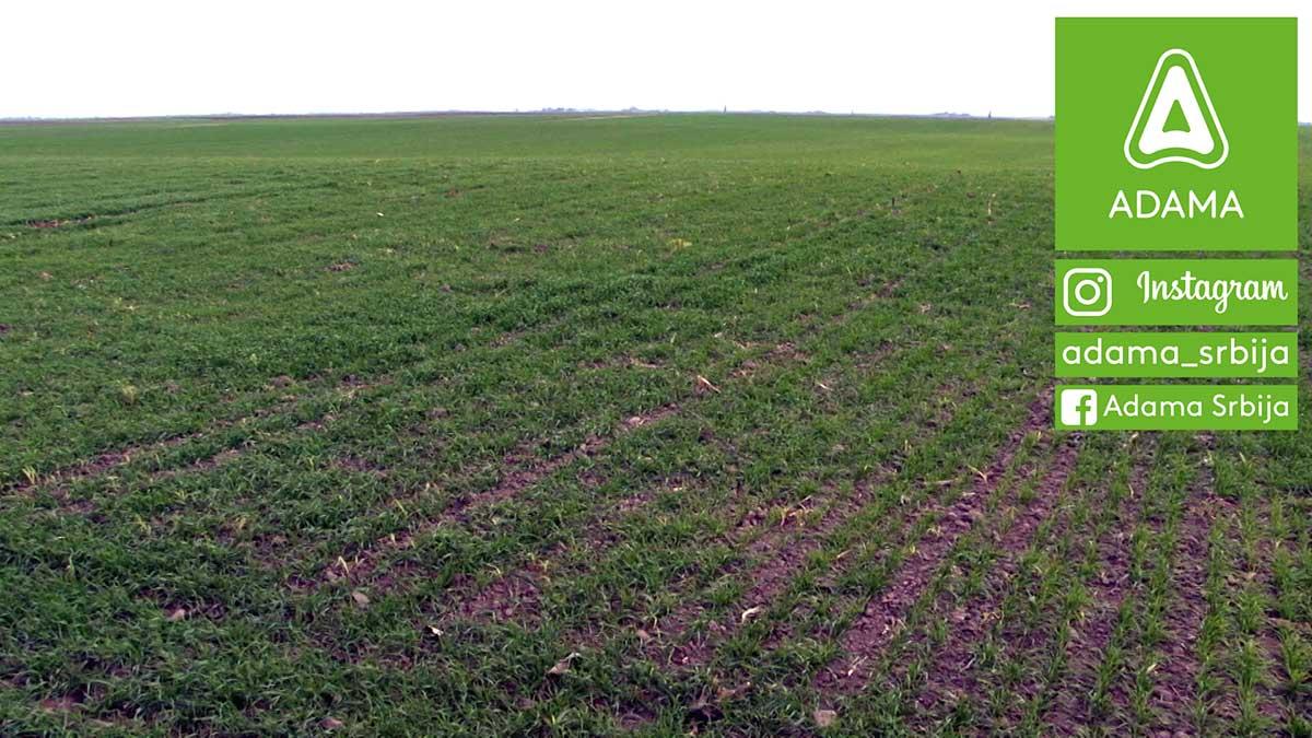 Agrosaveti---Adama---psenica---setva---gajenje---zastita---herbicid-02