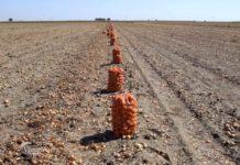 Agrosaveti---Crni-luk---Backi-Petrovac---01