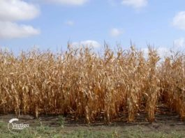 Agrosaveti---Ratarska-proizvodnja---Omoljica---01