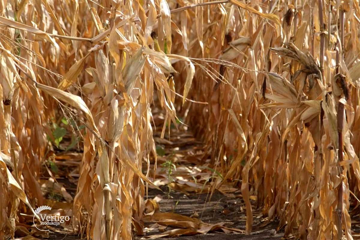 Agrosaveti---Ratarska-proizvodnja---Omoljica---02
