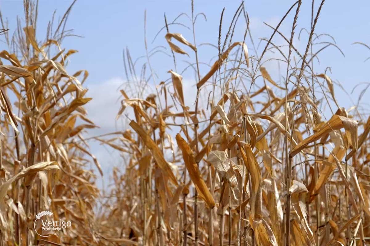 Agrosaveti---Ratarska-proizvodnja---Omoljica---03