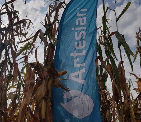 Agrosaveti---Syngenta---Arteisan-hibridi---kukuruz---02
