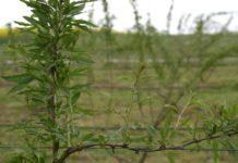 Agrosaveti---godzi-bobica---Mala-Bosna---02