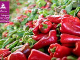 Agrosaveti---Adama---Paprika--Ruski-Krstur---Boris-Medjesi---Fotkaj-plod-i-uvecaj-rod---Konkurs-02