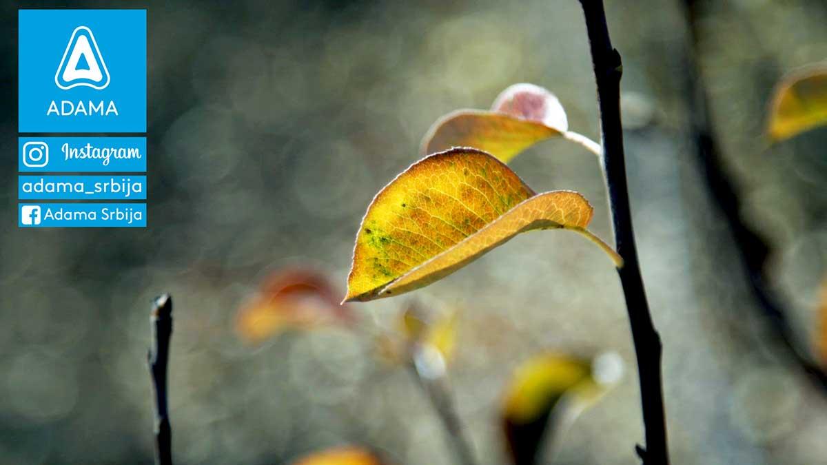 Agrosaveti---Adama---Voce---Jabuka---Kruska---Jesenje-plavo-prskanje---Neoram-01