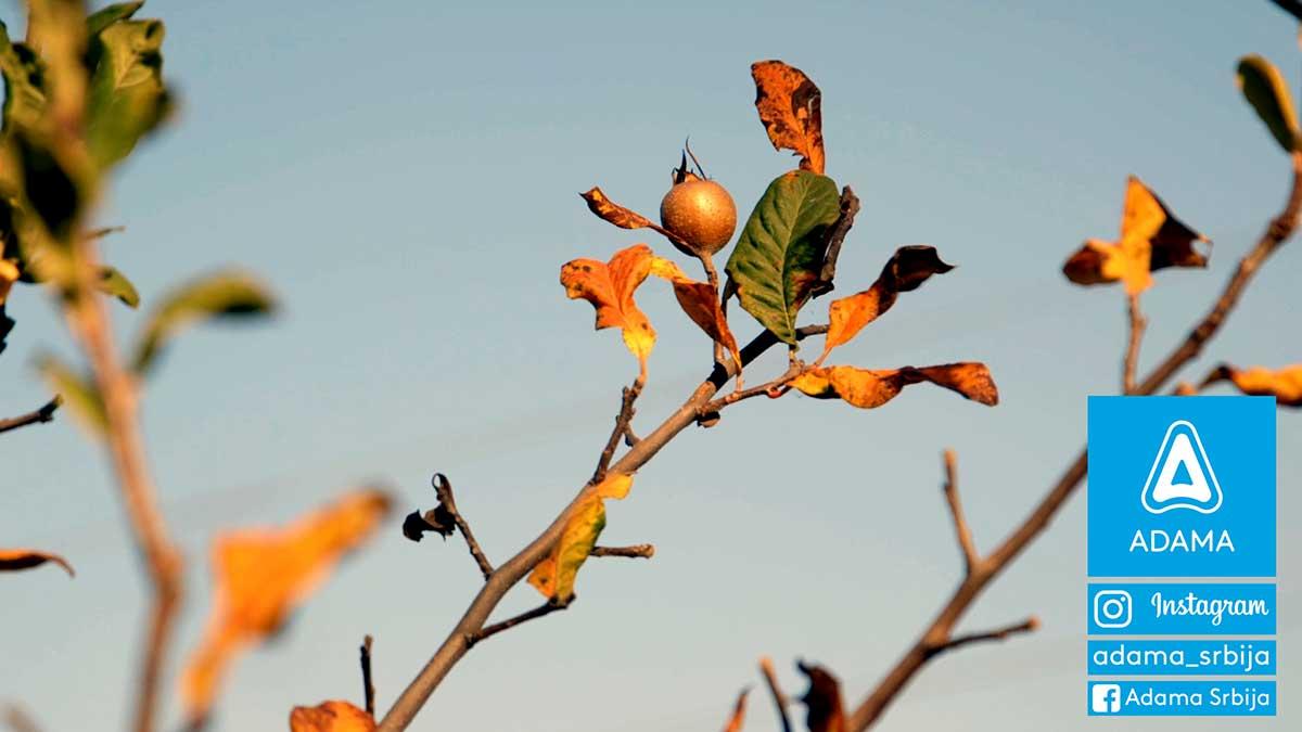 Agrosaveti---Adama---Voce---Jabuka---Kruska---Jesenje-plavo-prskanje---Neoram-02