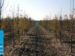 Agrosaveti---Adama---Voce---Jabuka---Kruska---Jesenje-plavo-prskanje---Neoram
