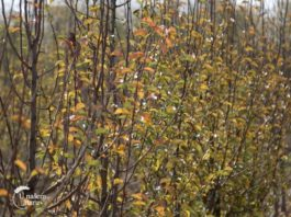 Agrosaveti---breskve---kruske---sljive---Pomoravlje---02
