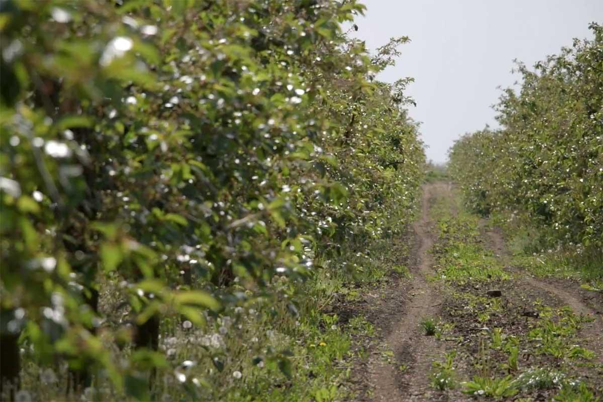 Agrosaveti---organska-poljoprivreda---Mamuzic---03