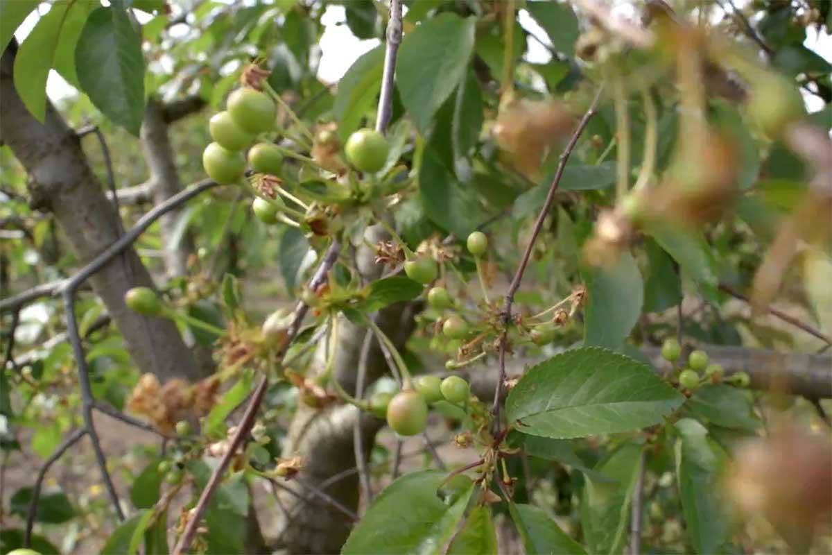 Agrosaveti---organska-poljoprivreda---Mamuzic---04