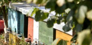 Agrosaveti--- pustite pcelare u pcelinjake---04