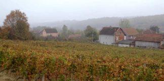 Agrosaveti---uzgoj-vinograda---Derenca---01