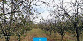 Agrosaveti---Adama---Jesenje-plavo-prskanje---bakterije---kosticavo-voce---mumificirani-plod---sljivik