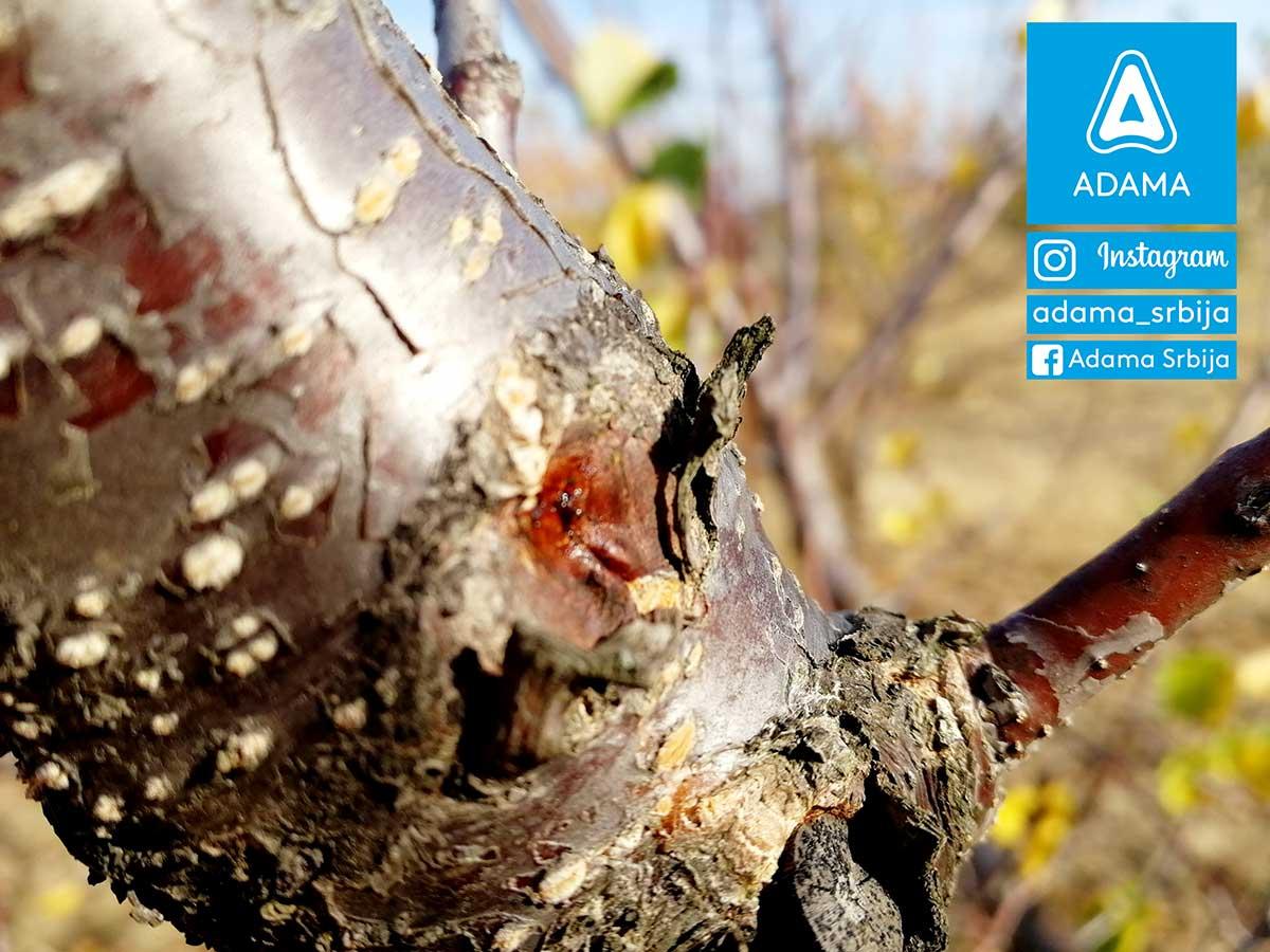 Agrosaveti---Adama---Jesenje-plavo-prskanje---bakterije---kosticavo-voce