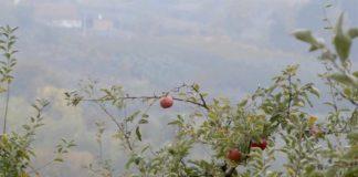 Agrosaveti---proizvodnja-jabuke---Vinca---02