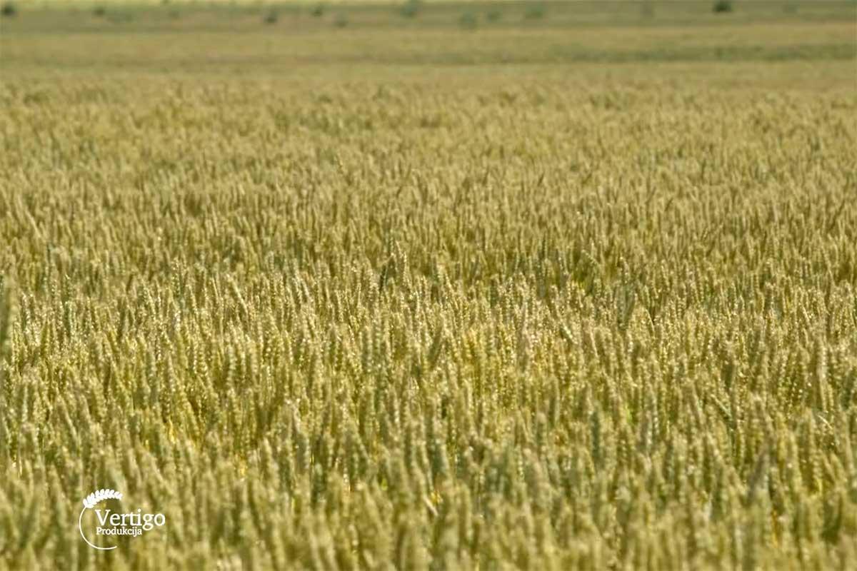 Agrosaveti---ratarstvo---govedarstvo---Curug---03