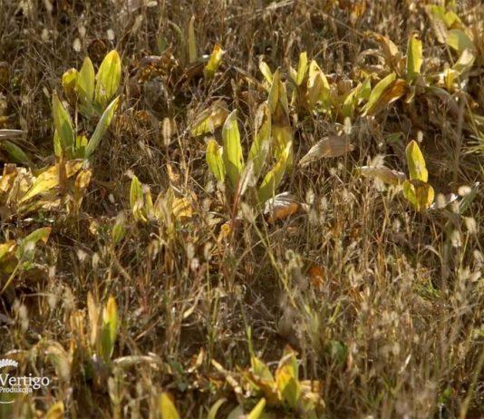 Agrosaveti---uzgoj-lekovitog-bilja---Valjevo---01