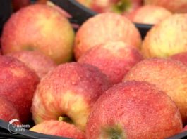 Agrosaveti---izvoz-jabuka---01