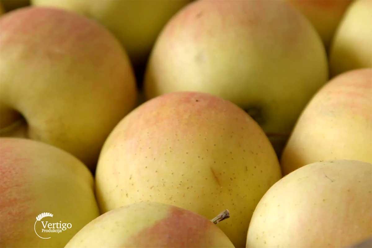 Agrosaveti---izvoz-jabuke---02
