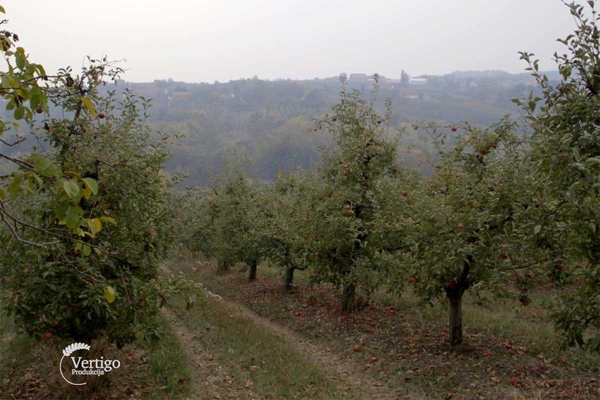 Agrosaveti---jabuke---Vinca---01