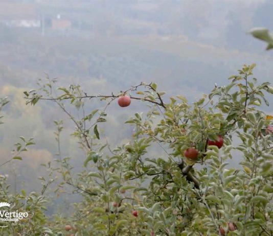 Agrosaveti---jabuke---Vinca---02