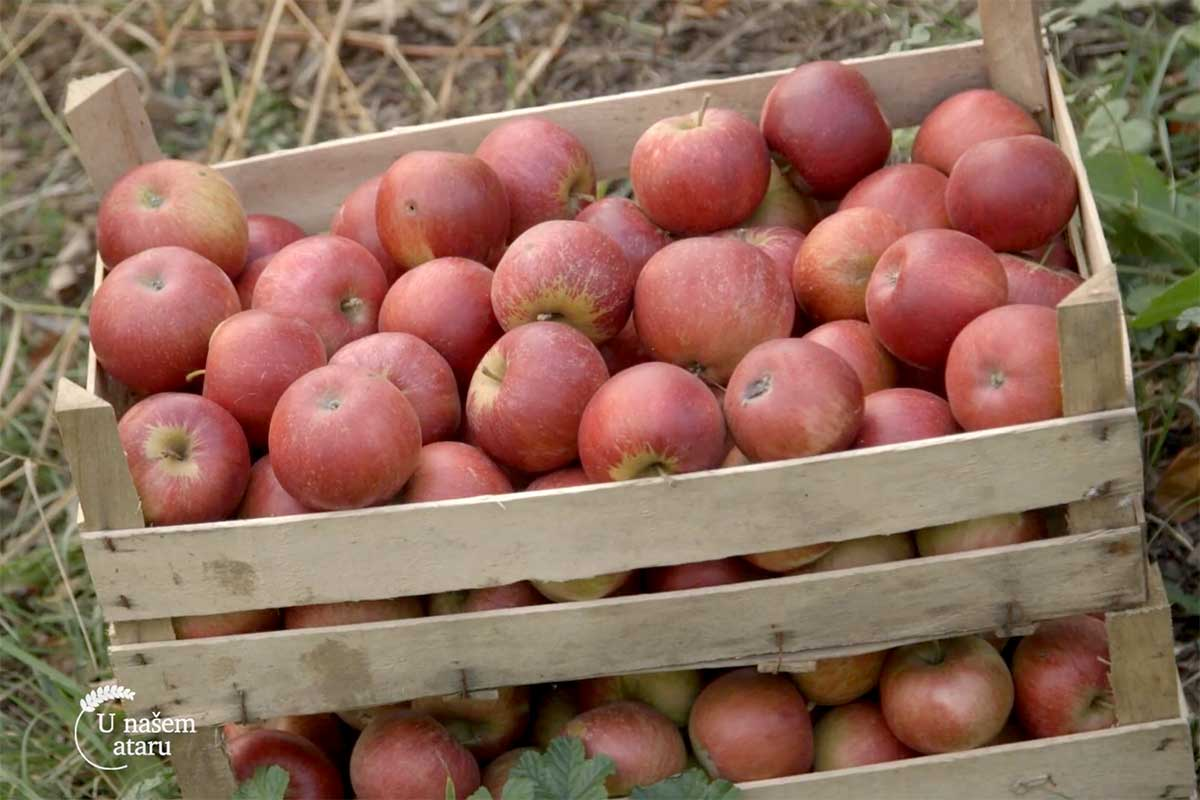 Agrosaveti---jabuke---Vinca---03