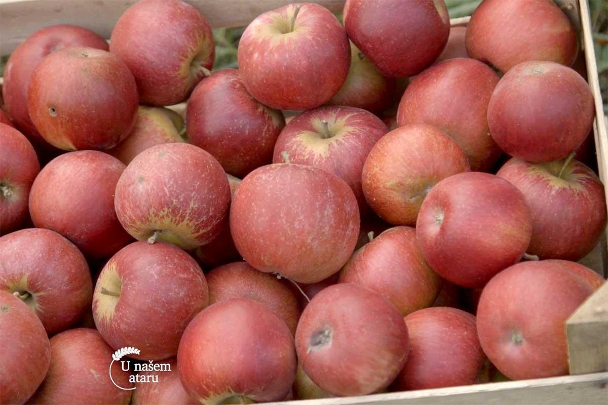 Agrosaveti---jabuke---Vinca---04