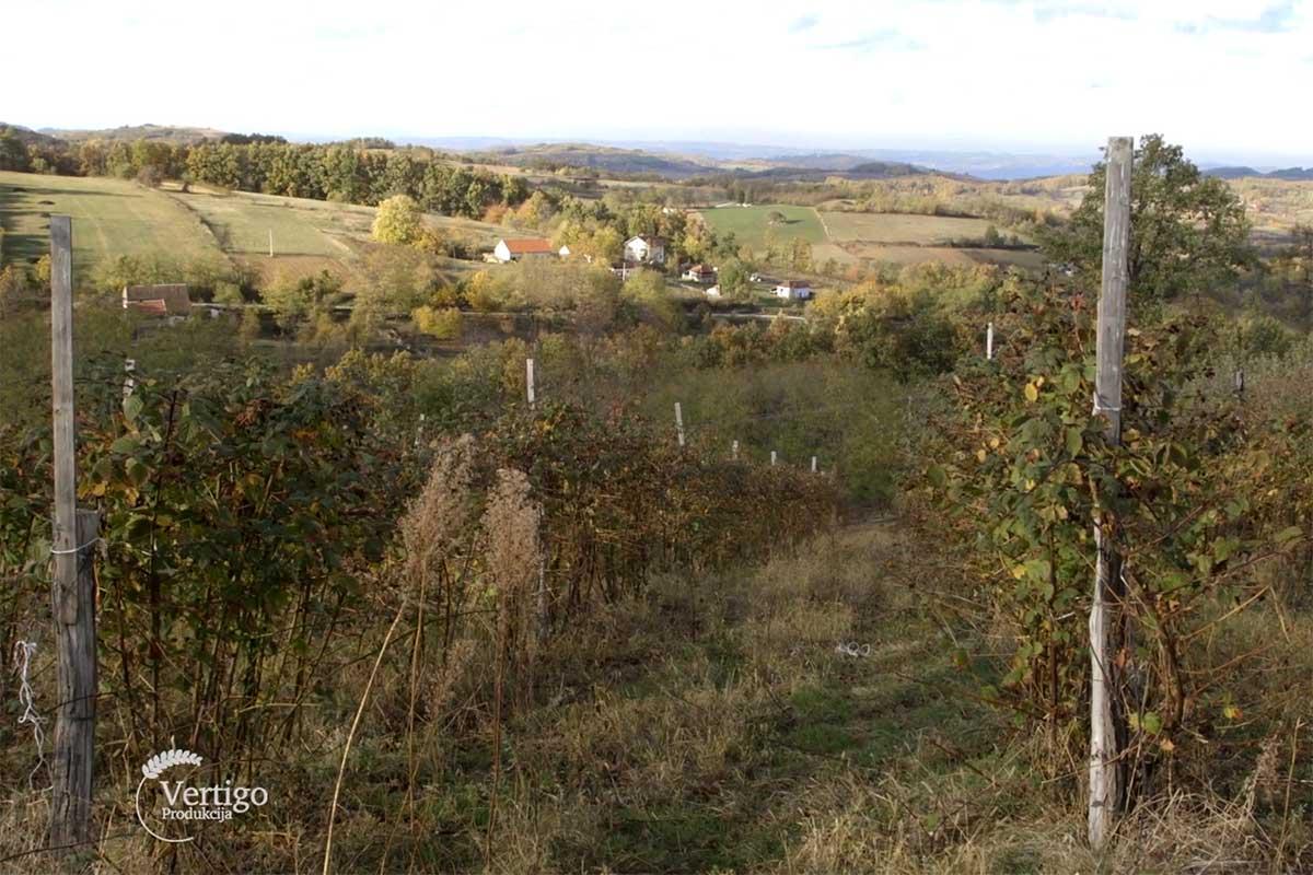 Agrosaveti---malina---Valjevo---01