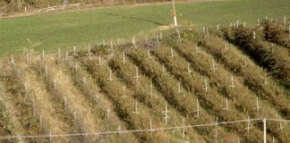 Agrosaveti---malina---Valjevo---03