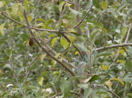 Agrosaveti---proizvodnja-jabuka---Novi-Slankamen---03