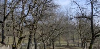 Agrosaveti---opstina-Knic---01