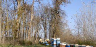 Agrosaveti---pcelarstvo---Vajska---03