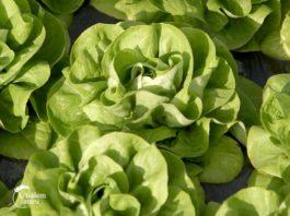 Agrosaveti---plastenicka-proizvodnja---povrce---02