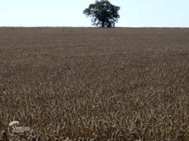 Agrosaveti---ratarsko-domacinstvo---Sakule---01