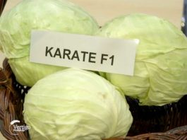Agrosaveti---savetovanje-povrtara---01
