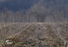Agrosaveti---zasad-jabuka---Knic---02