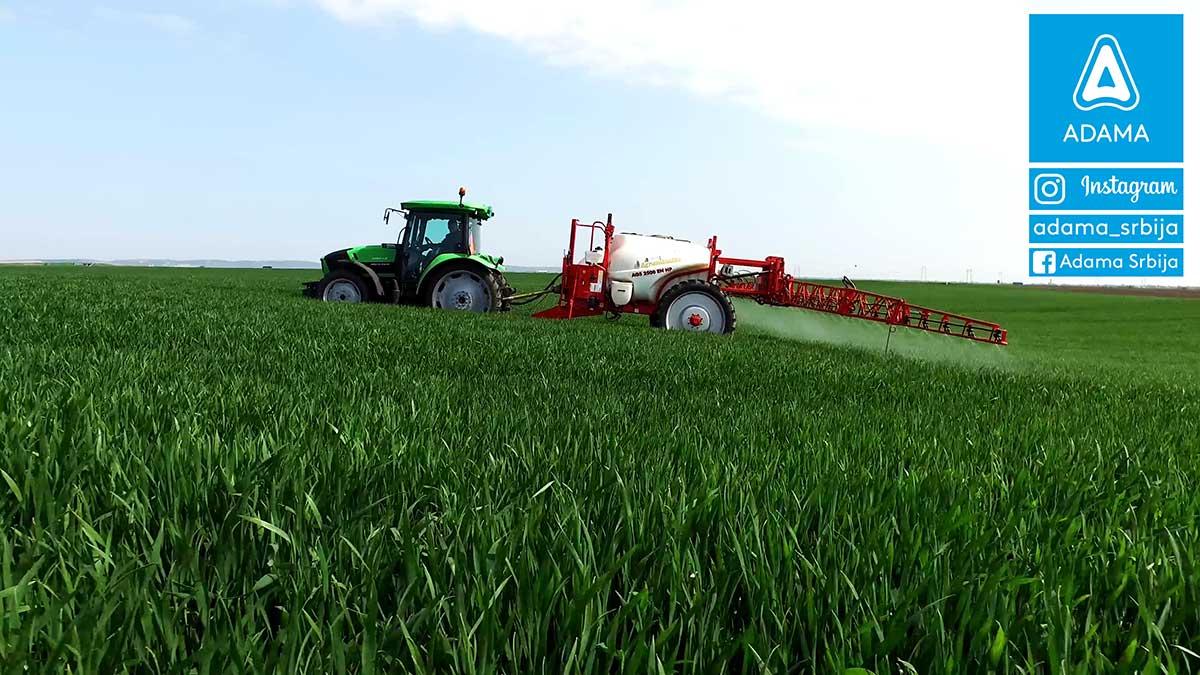 Agrosaveti---Adama---psenica---Bumper-P---prvi-tretman---Septoria---pepelnica---rdja-02