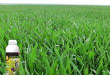 Agrosaveti---Agromarket---Fitofert---Speed-G---psenica---prolecna-prihrana-psenice-04