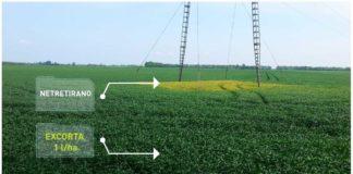 Agrosaveti---Agromarket---psenica---jecam---04