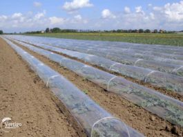 Agrosaveti---proizvodnja-lubenica---paprika---03