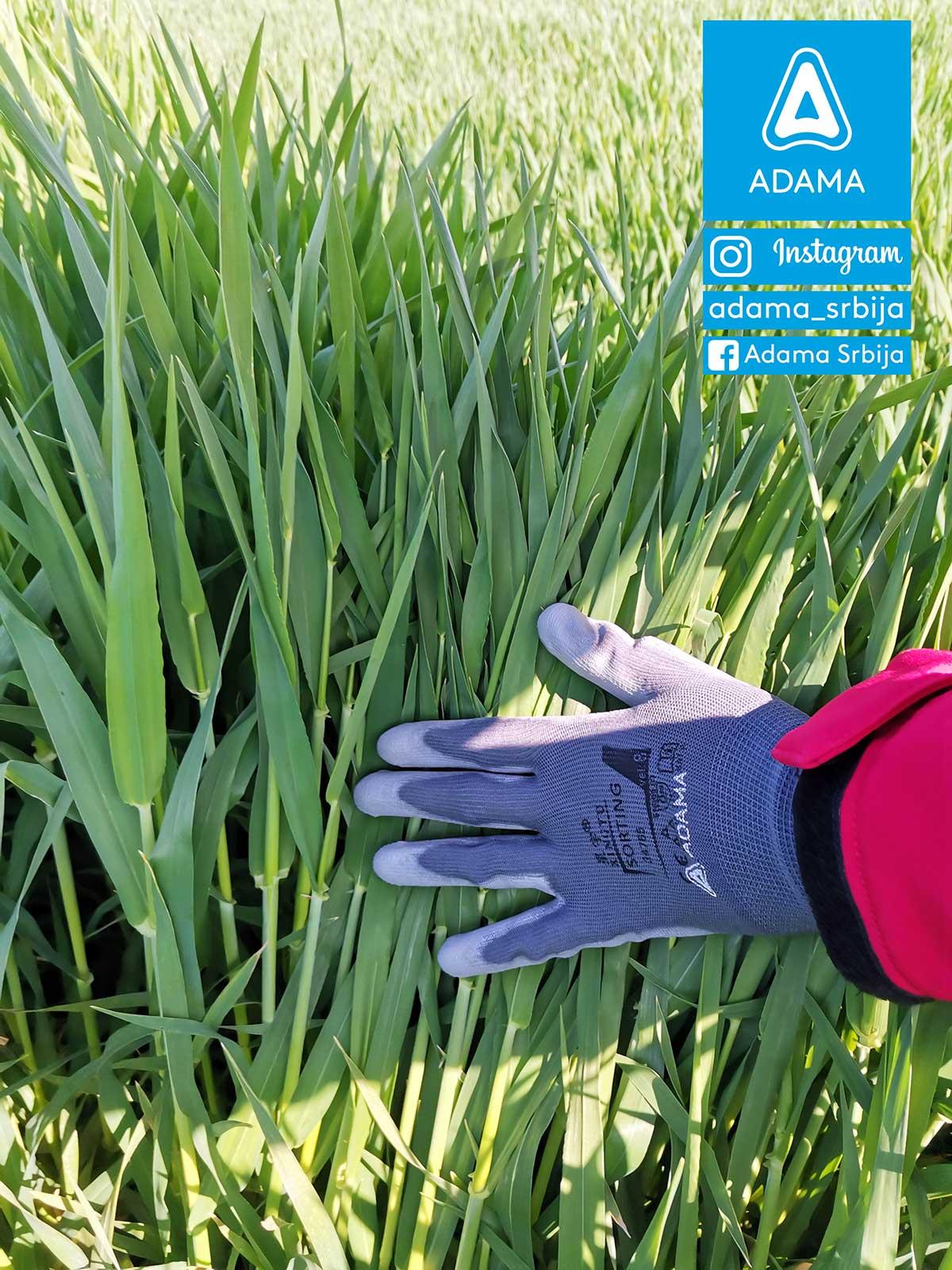 Agrosaveti---Adama---jecam---Custodia---bolest-lista-i-klasa---fungicid-02