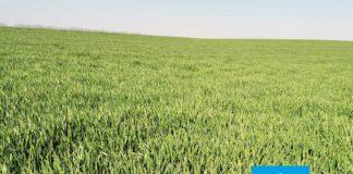 Agrosaveti---Adama---jecam---Custodia---bolest-lista-i-klasa---fungicid