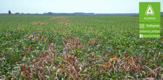 Agrosaveti---Adama---soja---Mistral---Agil---Leopard---Diler---korovi-03