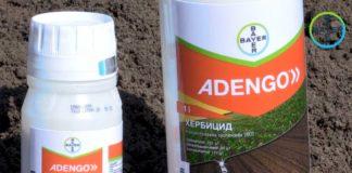 Agrosaveti---Bayer---Adengo---zastita-kukuruza-od-korova---01