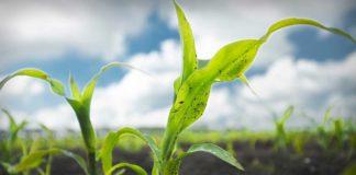 Agrosaveti---Bayer---pravilna-primena-herbicida---02
