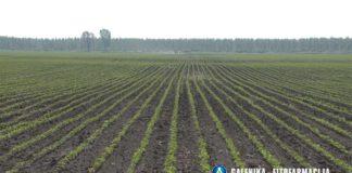 Agrosaveti---Galenika-fitofarmacija---soja---korovi